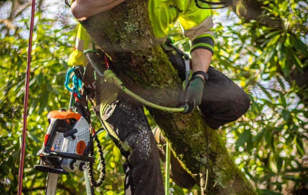 How much is a Tree Surgeon?