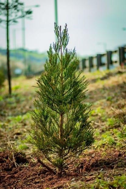 Planting Project – Riviera Way, Torquay