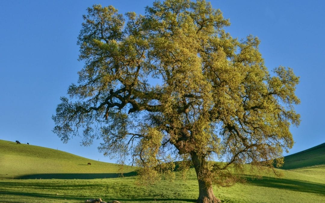 How long does it take for a tree to grow?