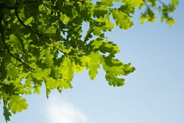 Saving Devon's Treescapes Project